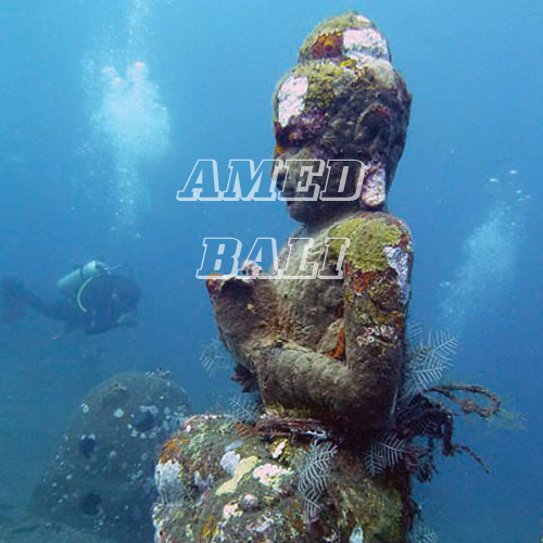 amed package two fish divers